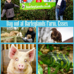 Collage of pictures of our family day out at Barleylands Farm